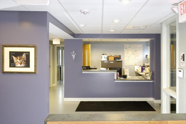 Projects_Animal Emergency Clinic of York | Professional Design and ...